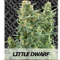 Auto Seeds - Little Dwarf