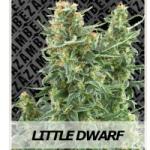 Auto Seeds - Little Dwarf