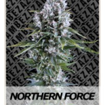 Auto Seeds - Northern Force