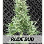 Auto Seeds - Rude Bud