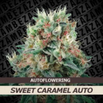 Auto Seeds - Sweet Caramel