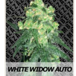 Auto Seeds - White Widow