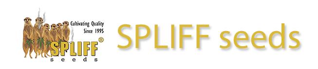Buy Spliff Seeds Online