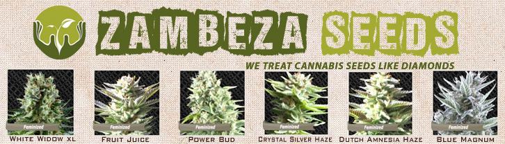 Buy Zambeza Seeds Online