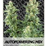 Zambeza Seeds Autoflowering Mix