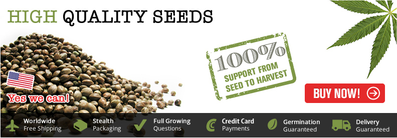 Buy Auto Seeds - Free Worldwide Shipping.