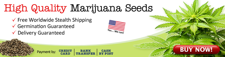 Buy Autoflowering Cannabis Seeds - Free USA Shipping.