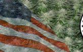 Buy Autoflowering Marijuana Seeds In Alabama