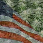 Buy Autoflowering Marijuana Seeds In Arkansas