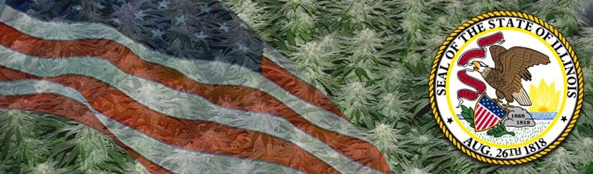 Buy Autoflowering Marijuana Seeds In Illinois