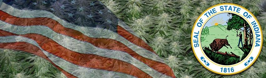 Buy Autoflowering Marijuana Seeds In Indiana