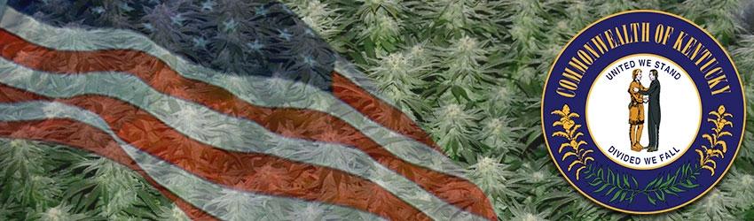 Buy Autoflowering Marijuana Seeds In Kentucky