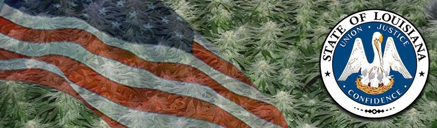 Buy Autoflowering Marijuana Seeds In Louisiana