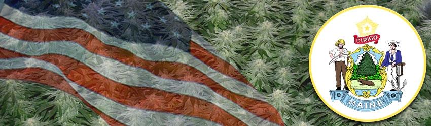 Buy Autoflowering Marijuana Seeds In Maine