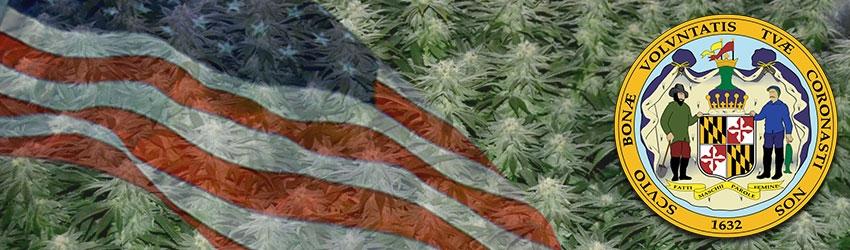 Buy Autoflowering Marijuana Seeds In Maryland