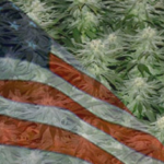 Buy Autoflowering Marijuana Seeds In Michigan