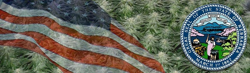 Buy Autoflowering Marijuana Seeds In Nebraska
