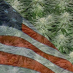 Buy Autoflowering Marijuana Seeds In North Carolina