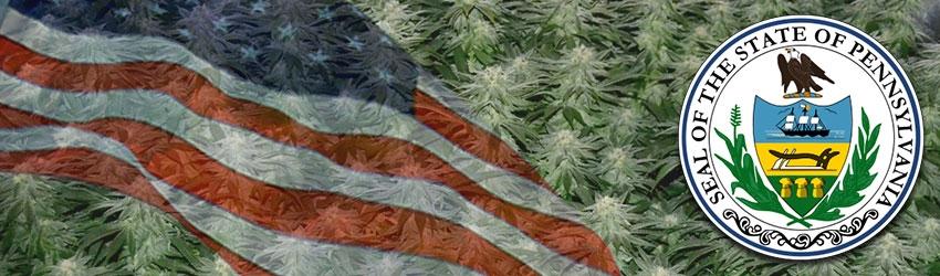 Buy Autoflowering Marijuana Seeds In Pennsylvania
