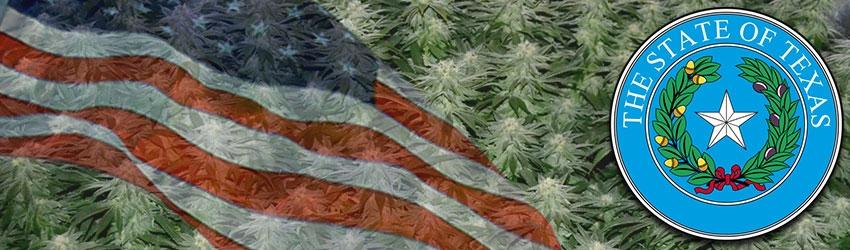 Buy Autoflowering Marijuana Seeds In Texas