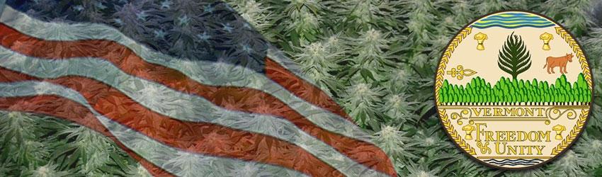 Buy Autoflowering Marijuana Seeds In Vermont