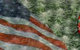 Buy Autoflowering Marijuana Seeds In Virginia