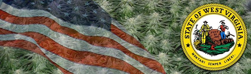 Buy Autoflowering Marijuana Seeds In West Virginia