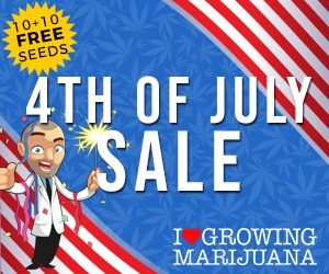Autoflowering Seeds Sale 4th July