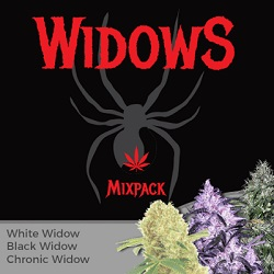 Widow Mixpack Cannabis Seeds