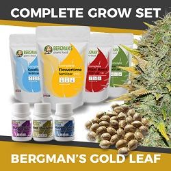 The Complete Gold Leaf Grow Kit For Beginners