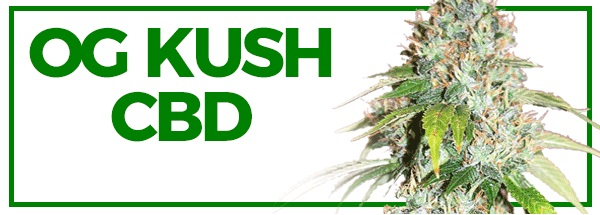 OG KUSH CBD Feminized Seeds