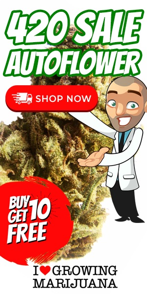 420 Auto Seeds Sale