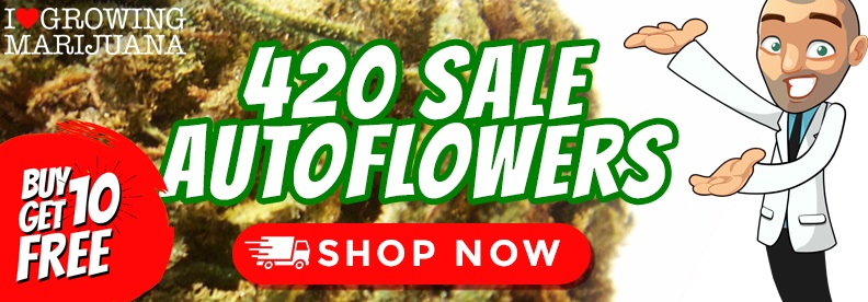 Auto Seeds 420 Offers